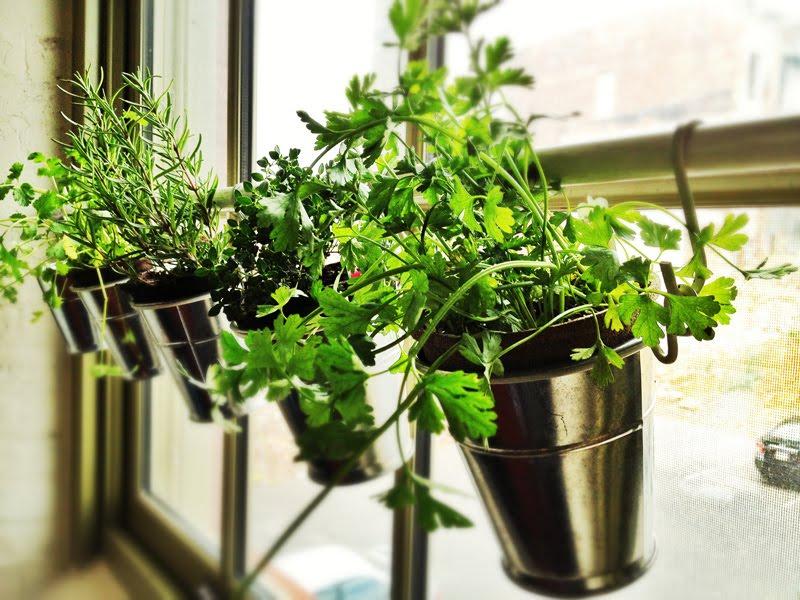 fresh kitchen herb garden-edgewood cabinetry